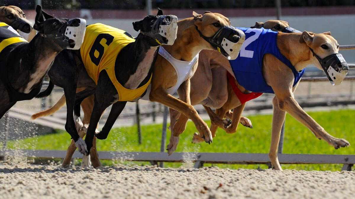 Friday dog racing betting which horse to bet on melbourne cup