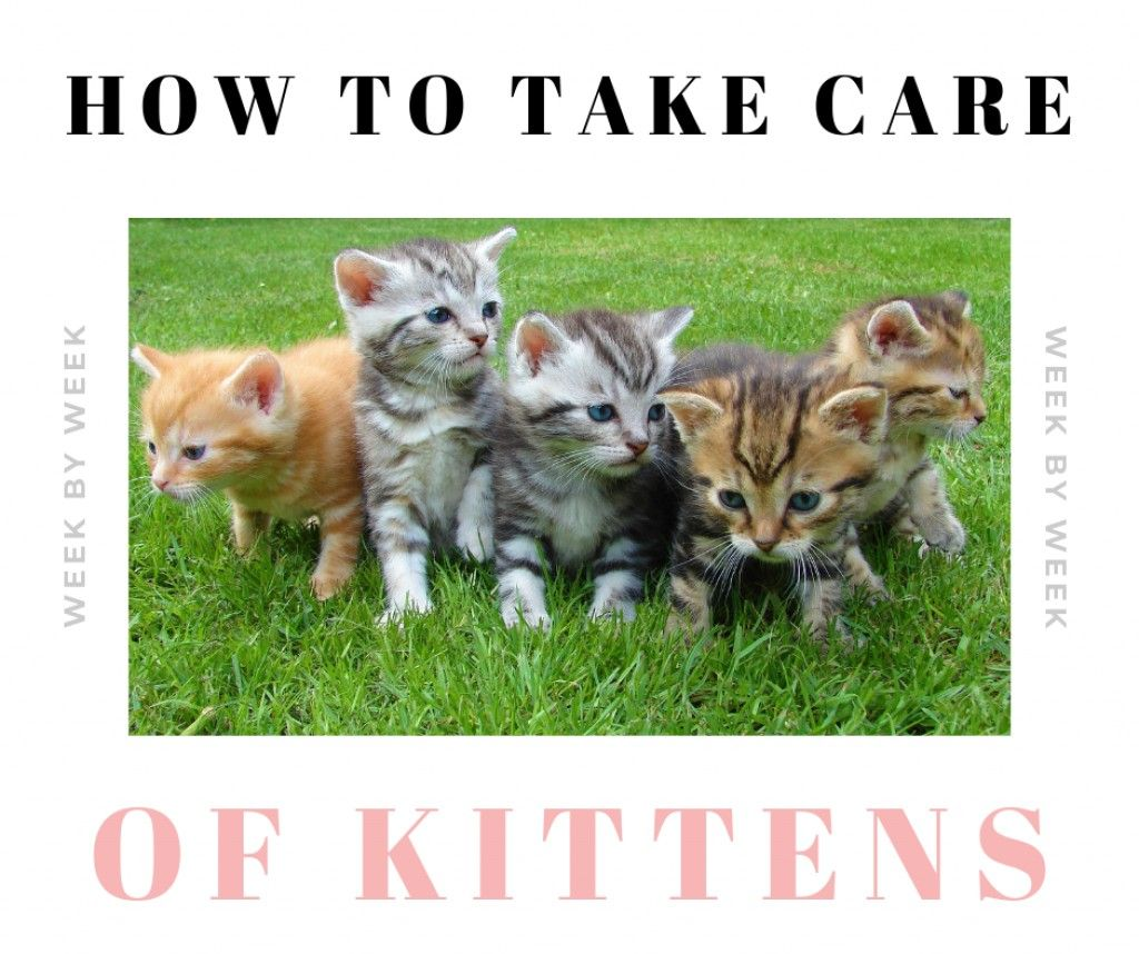 How To Take Care Of Newborn Kittens Week By Week In 2020 Newborn Kittens Kitten Care Kittens