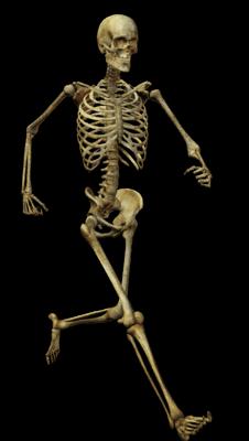 Running Skeleton Transparent Png Stickpng Human Skeleton Skeleton Anatomy Skeleton