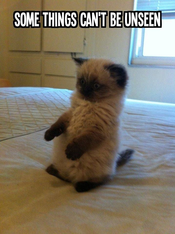 (76) Photos du journal Funny cat captions, Funny cats
