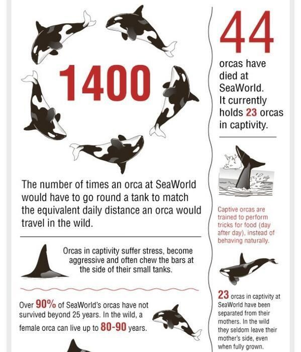 Seaworldpledge Some Facts About Blackfish In Captivity Via Http T Co S3hzzhallc Http T Co Lc1xd8f4j0 Orcas In Captivity Sea World Orca