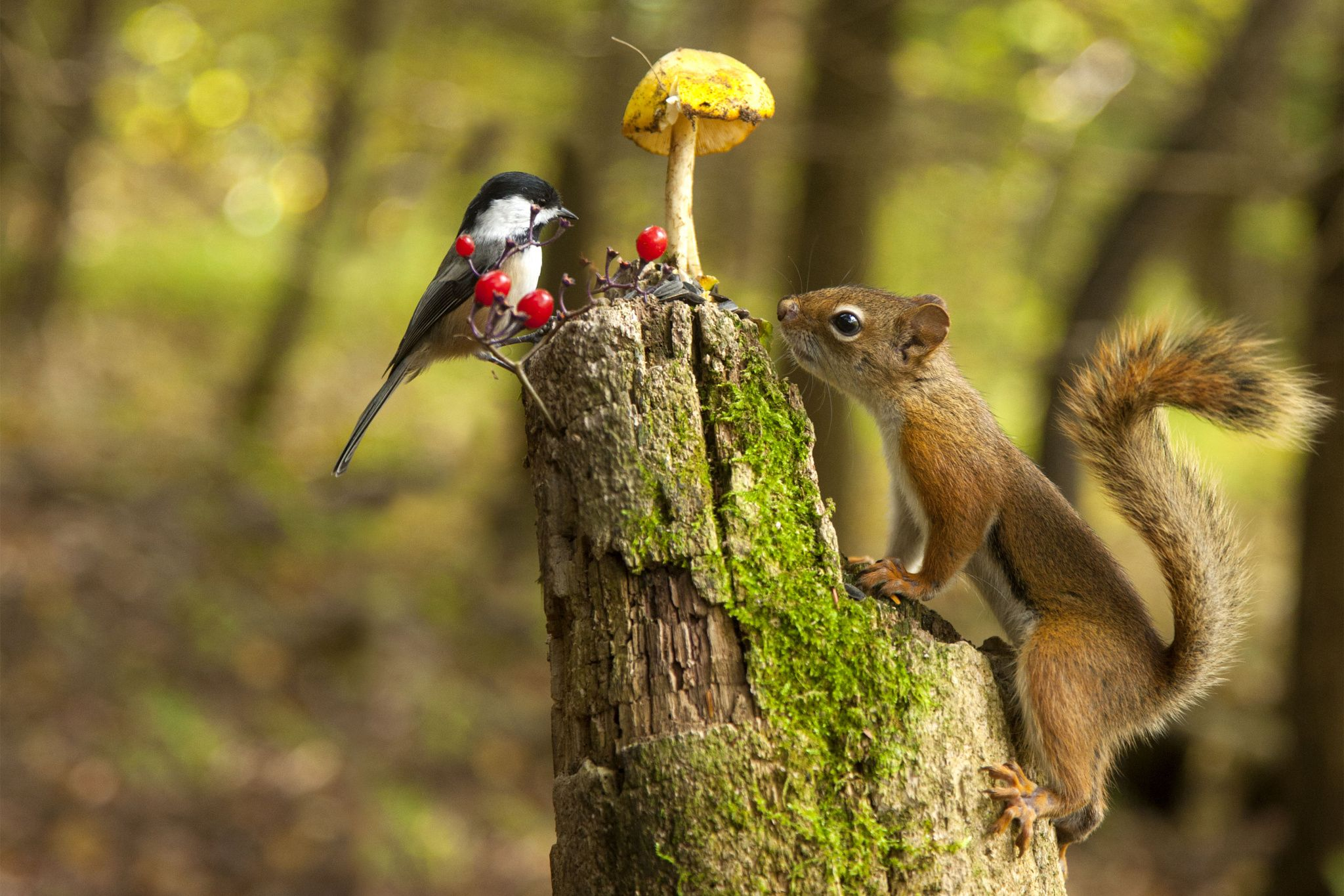 The bird the mushroom and the squirrel - null