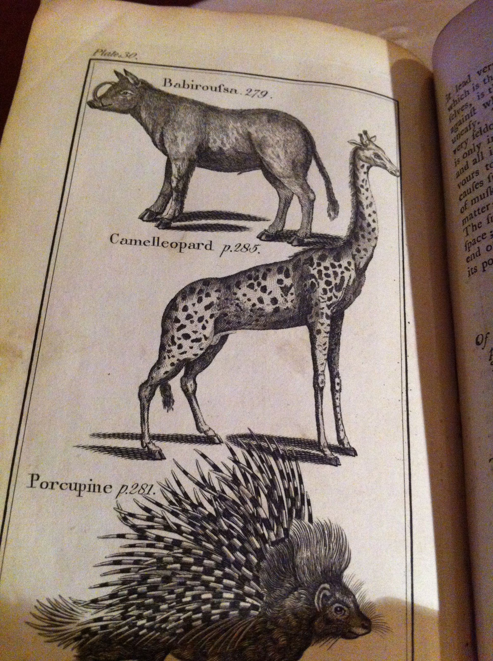 "Illustrations from ""Buffon's Natural History"" from 1792. Here a Giraffe is called a ""Camelleopard""."