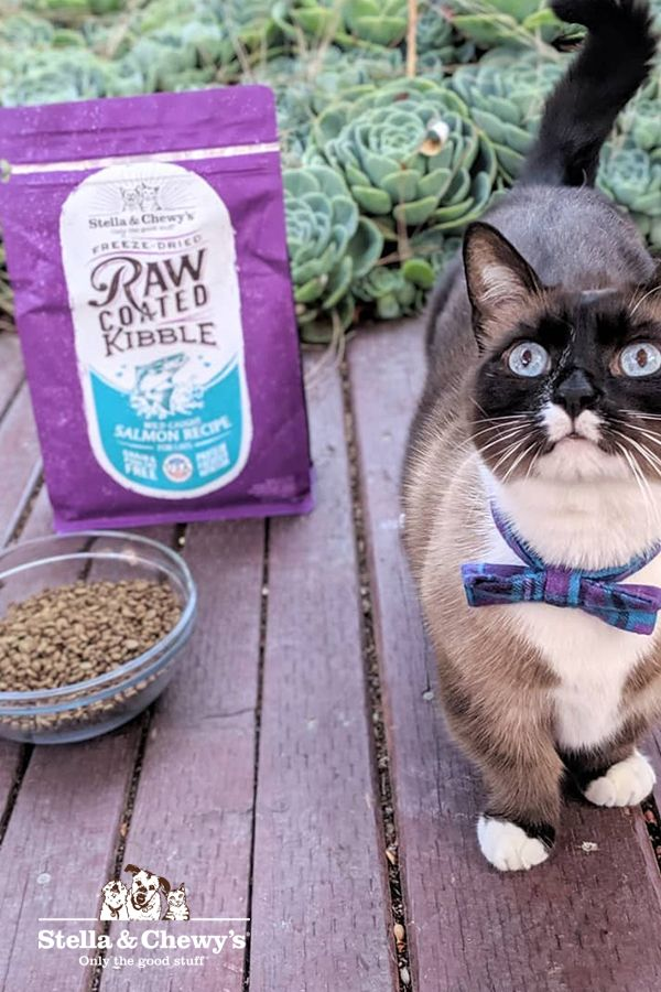 Introducing Stella & Chewy's Raw Coated Kibble for Cats