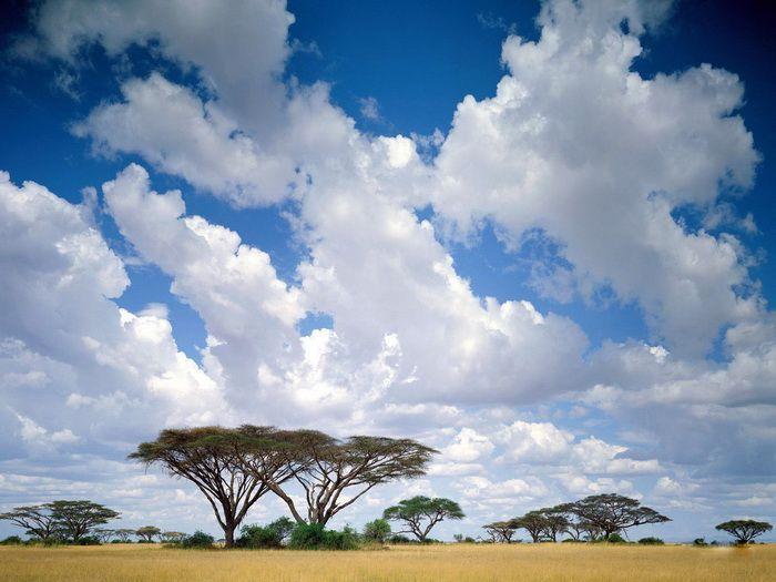 Clouds/savanna