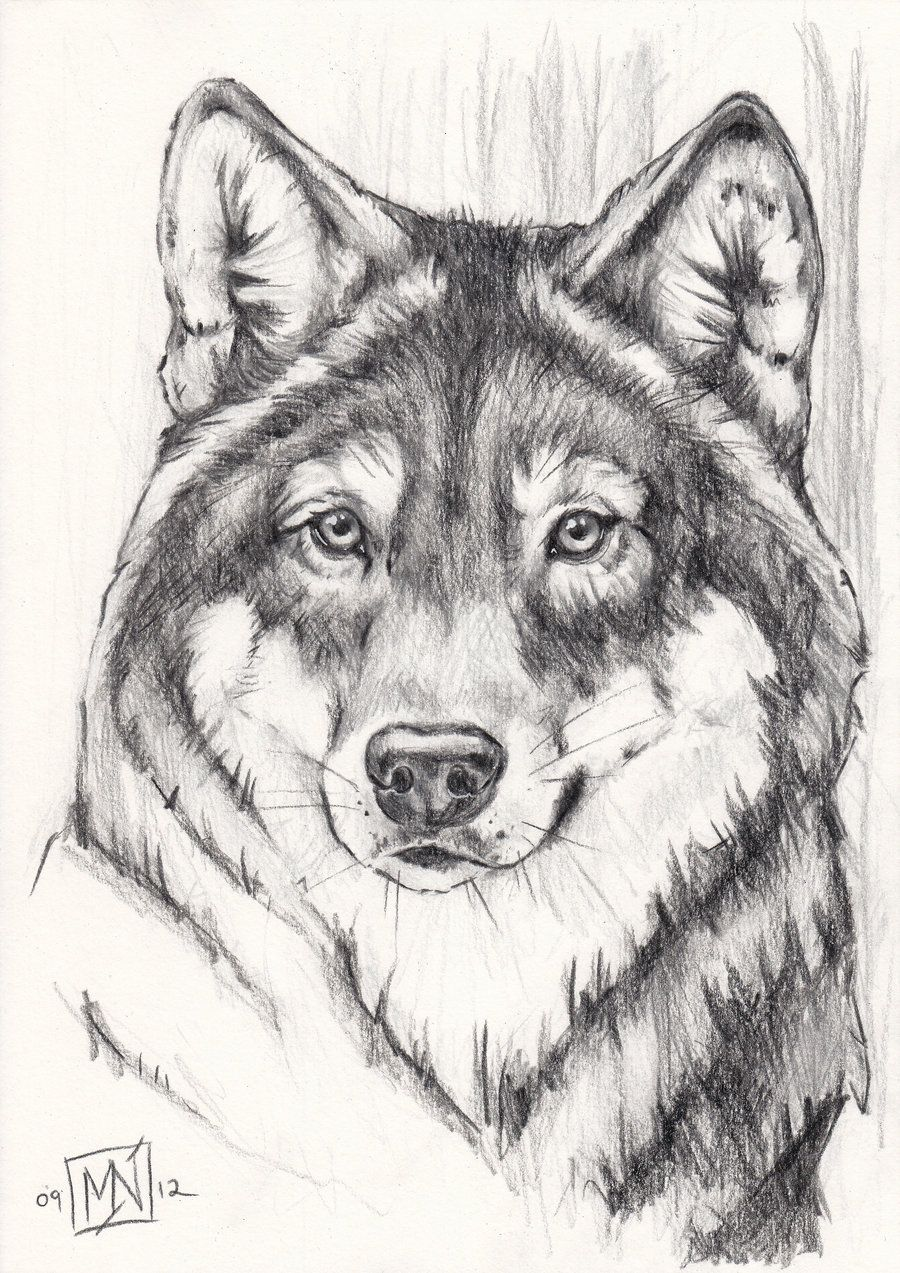 Grey Wolf By Kattval With Images Pencil Drawings Of Animals