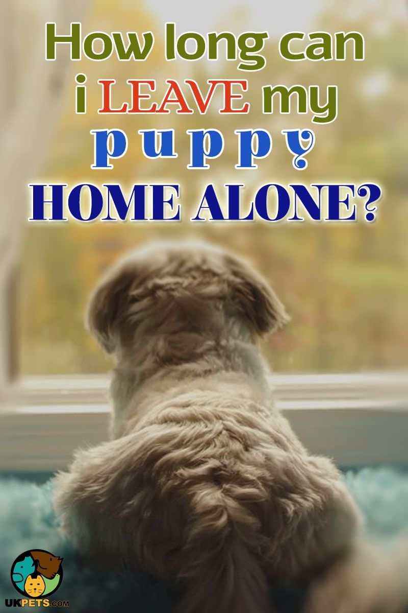 Puppies Younger Than 10 Weeks Should Not Be Left Alone For More