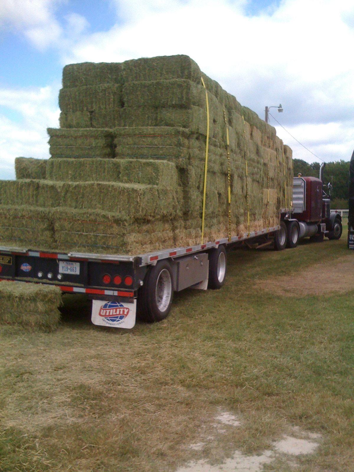 Alfalfa Hay Bale