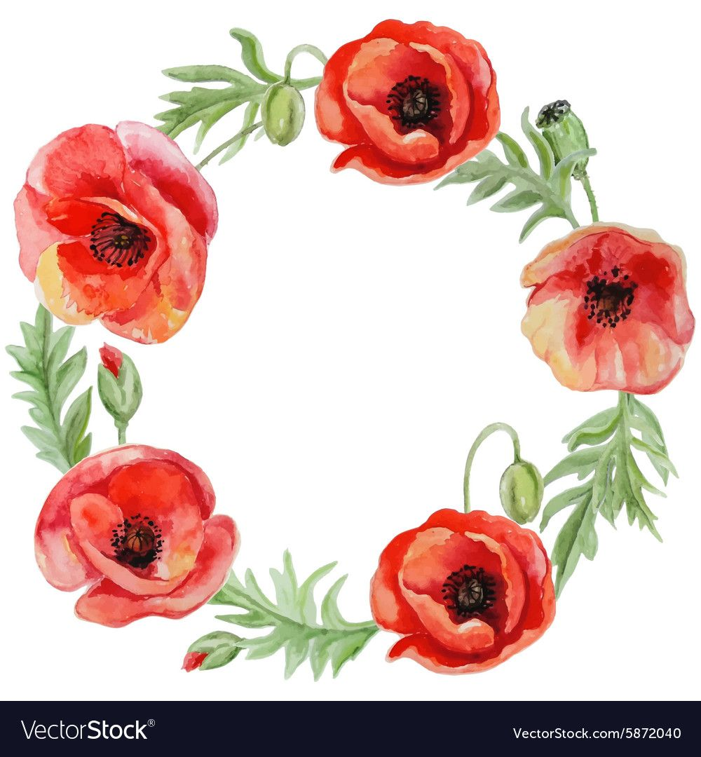 Frame with red watercolor poppy flowers Royalty Free
