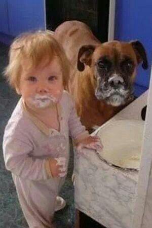 泡だらけの犬と赤ちゃん