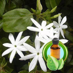Bulk jasmine essential oil in therapeutic grade precious essential bulk jasmine essential oil in therapeutic grade mightylinksfo