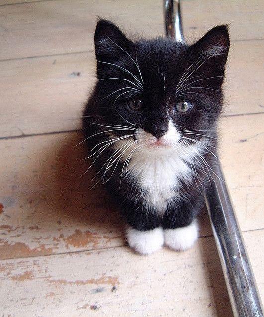 Pin von Rajana💎 ️ auf Tiere Süße tiere, Baby katzen