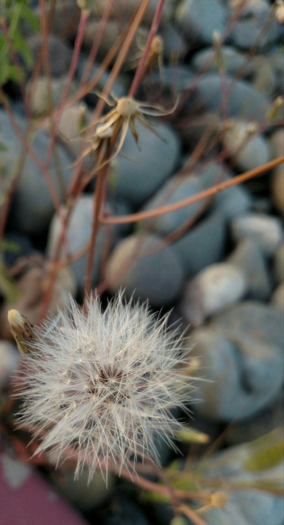 Idea by Diana Eichhorn on Nature rocks Flowers, Plants
