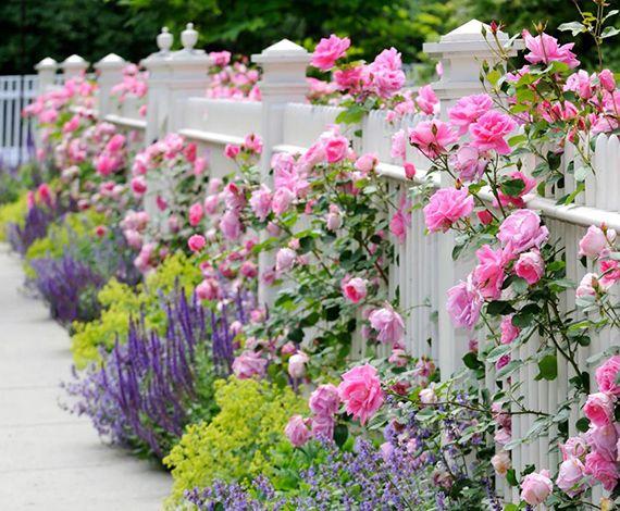 Zaun und Mauer im Garten als ein lebendiger Akzent #erhöhtepflanzbeete