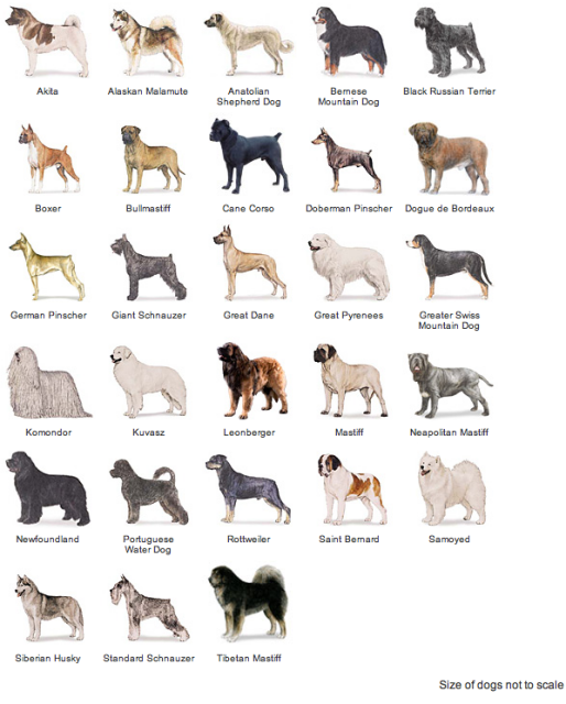 Working Dogs: American Kennel Club Breeds | dogs | Dogs, Dog