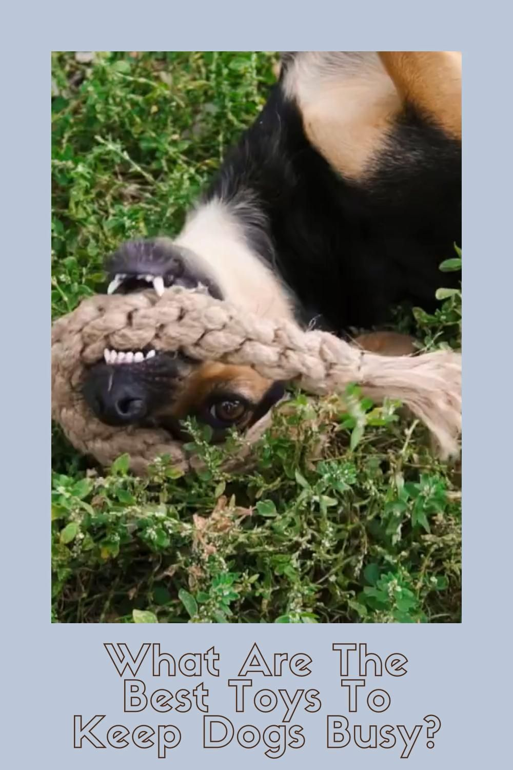 How to Keep Your Dog Busy- The Secret Is These Toys!