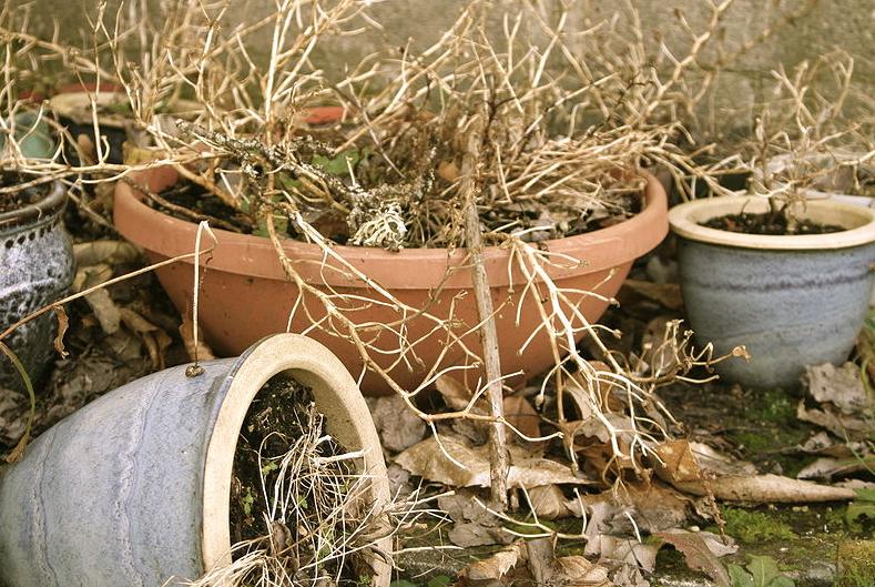 5 astuces pour sauver une plante morte et la faire