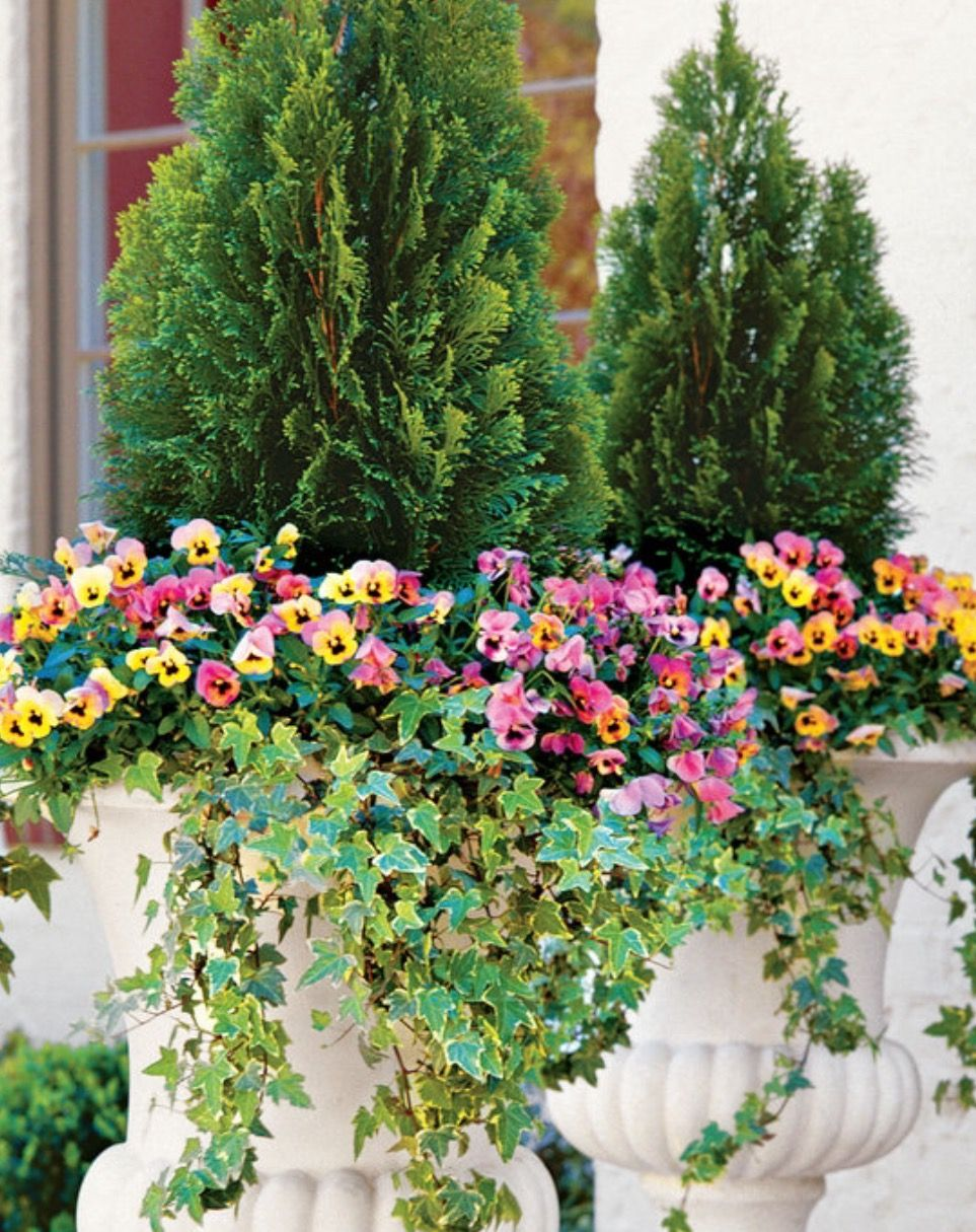 Pin by Grace on container gardens   Pinterest   Gardens, Planters ...
