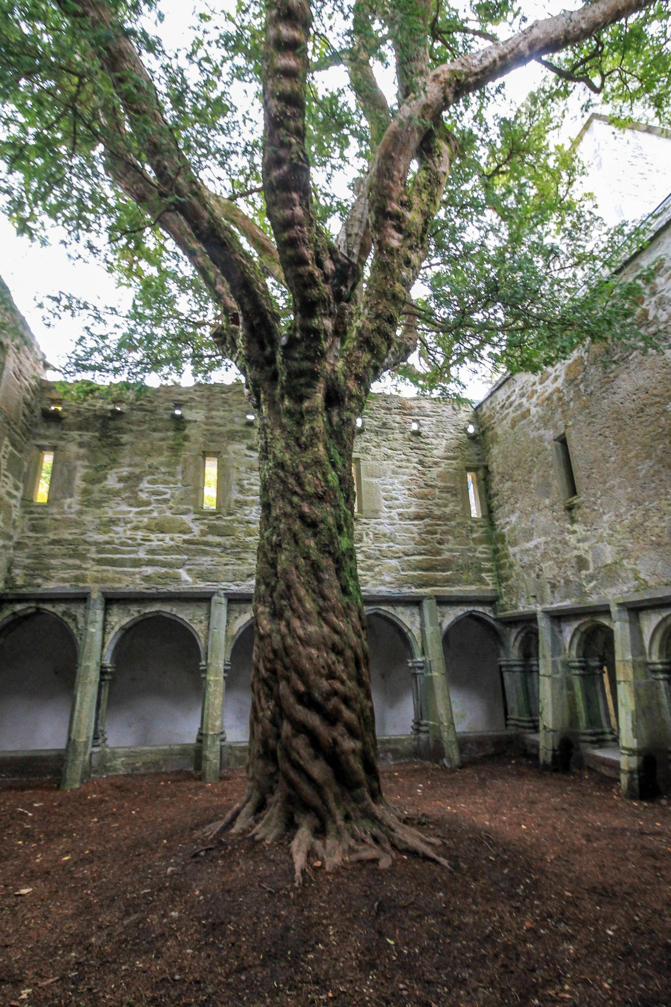 Planning an Itinerary to Ireland Without a Rental Car - Curious Travel Bug