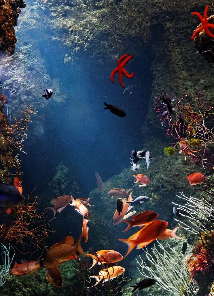 (by cadetlu) Ocean creatures, Sea world, Underwater world