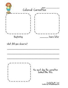 graphic about Celery Experiment Printable Worksheet identified as Meals Coloring Celery Experiment Worksheet university To start with
