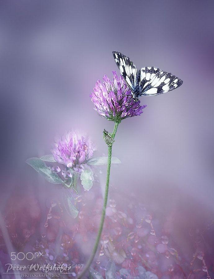 Butterfly by PeterWolfshfer #nature #photooftheday #amazing #picoftheday