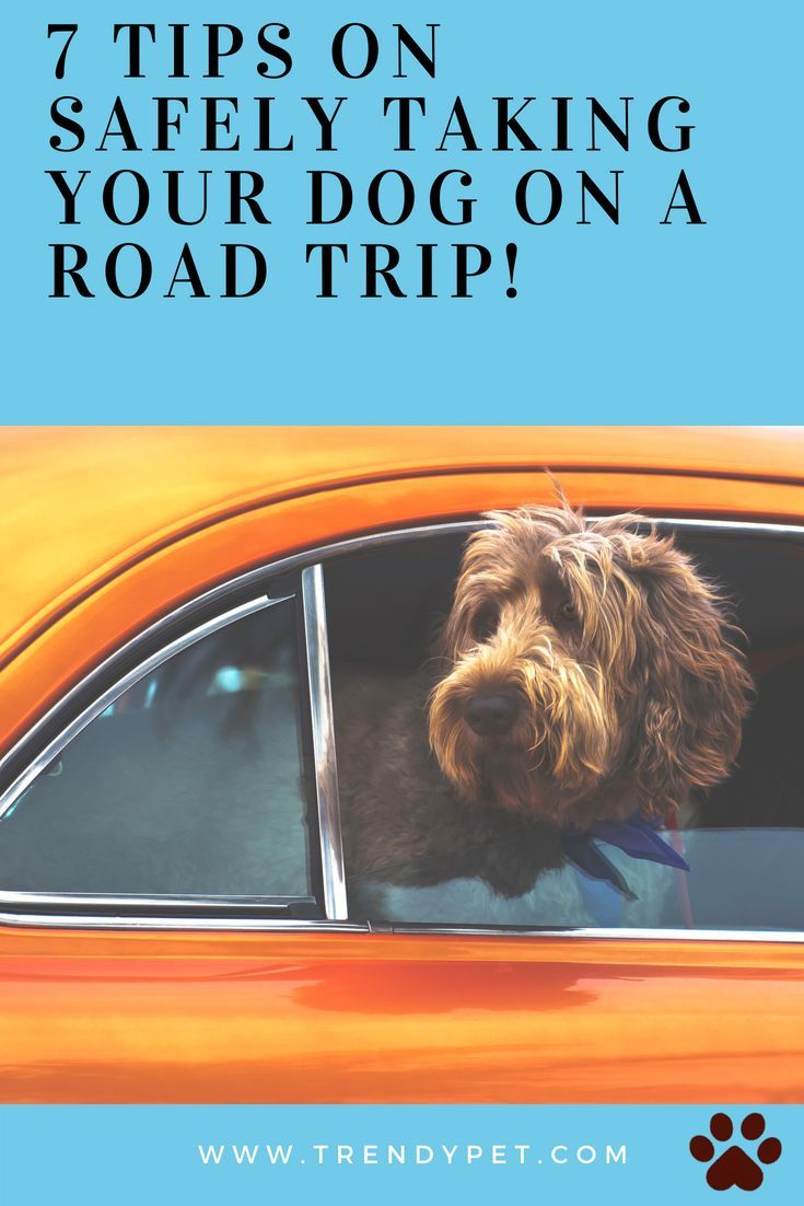 7 Tips for Traveling with Your Pets forecast