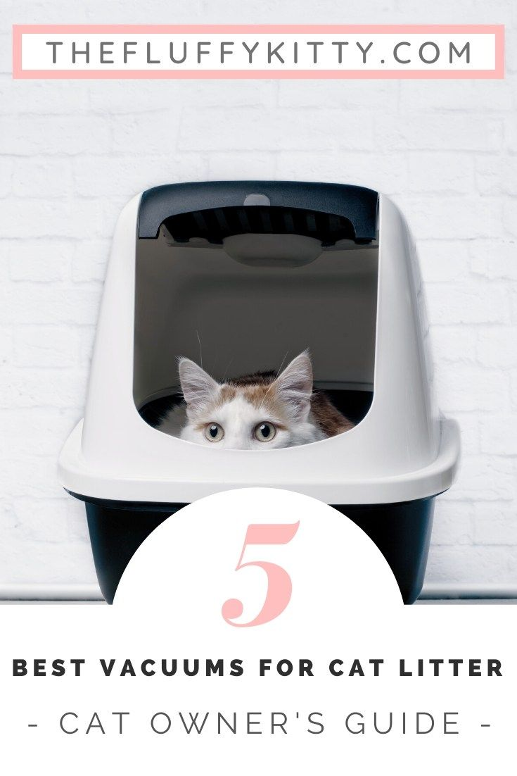 The 5 Best Vacuums For Cat Litter 2019 Reviews Guide