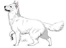 Afbeeldingsresultaat voor white shepherd | White swiss shepherd, White  shepherd, Elephant drawing