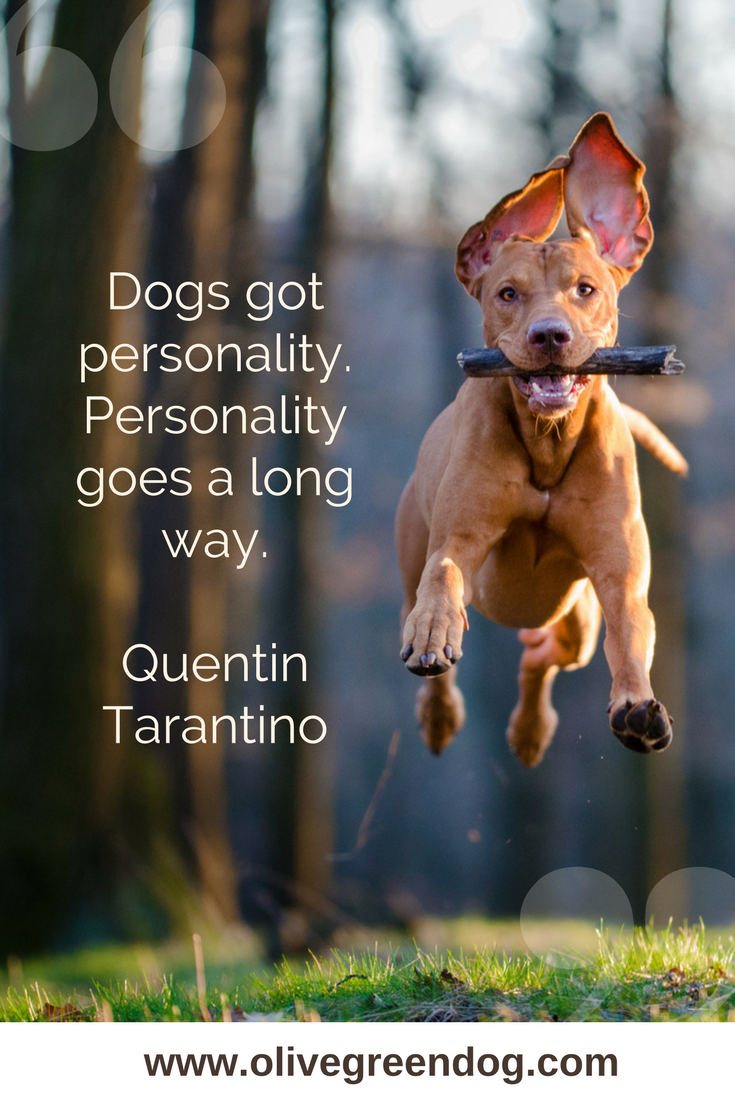 Pin By Olivegreendog On Dog Quotes Dog Quotes Dogs Funny Dogs