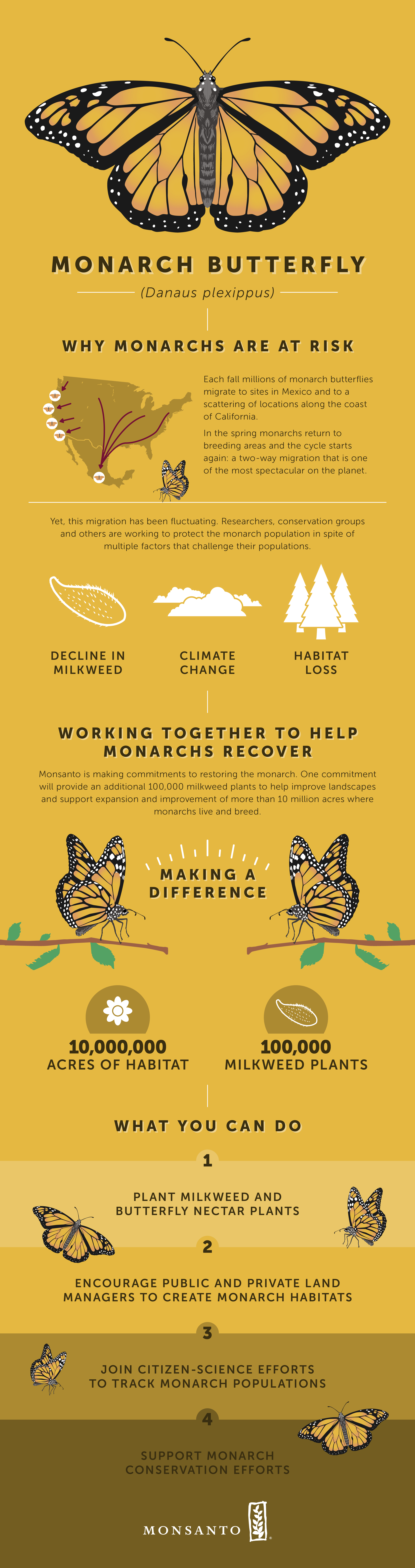 Learn How The Monarch Butterfly Migration Is A Journey Of