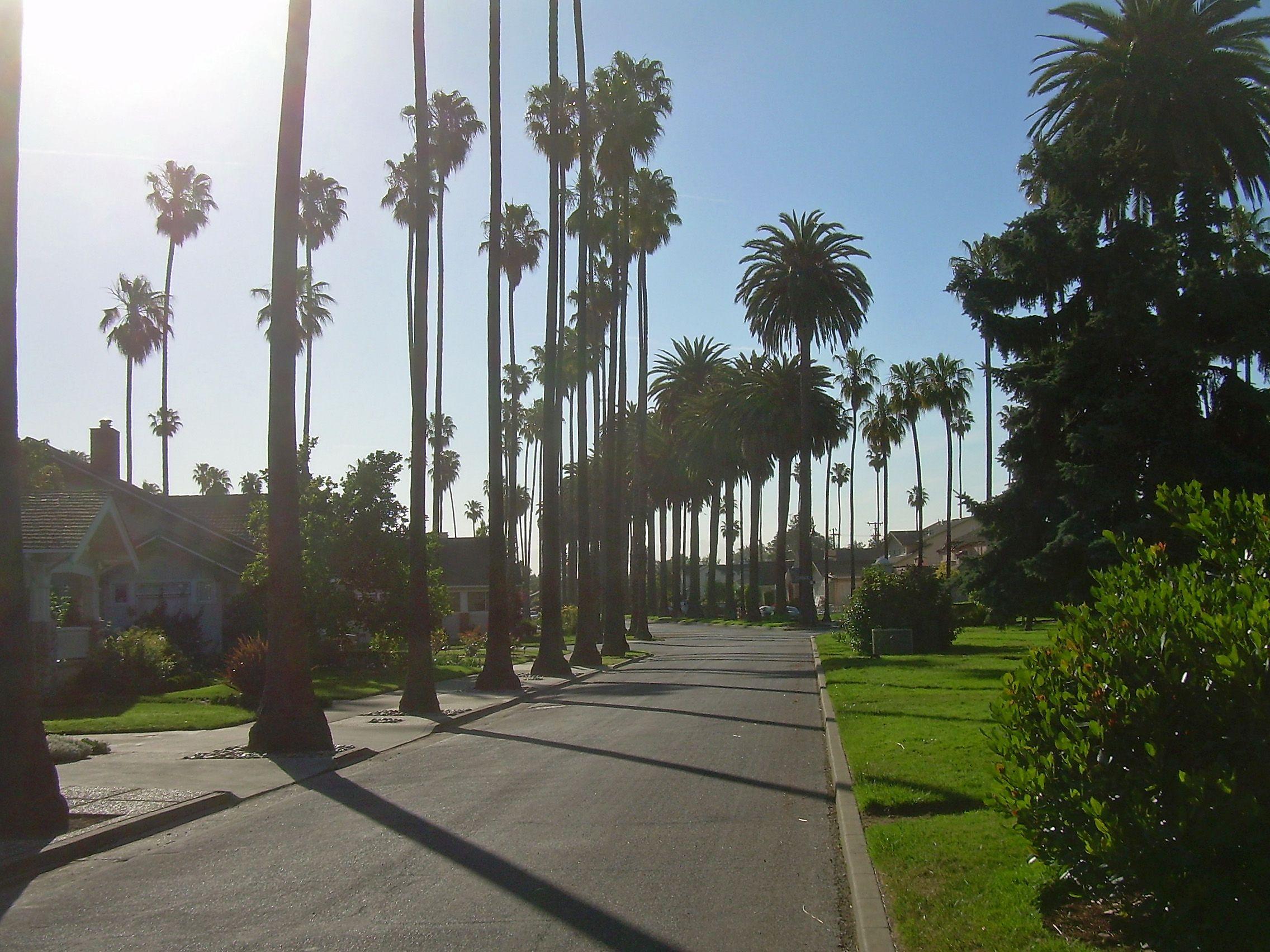 San Jose Monterey Map%0A California Palm Trees   Description Palm Trees in San Jose California jpg   Okay everybody