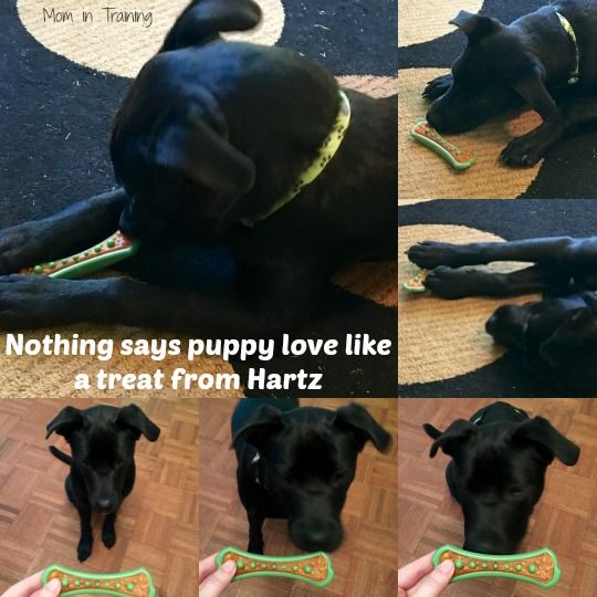 Nothing Says Puppy Love Like A Treat From Hartz Puppies Puppy Love Pets