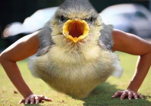 Birds With Arms Meme Ridiculousness Bird Photo Funny Photos Funny Images