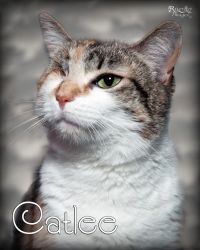 Catlee ~ 4777 is an adoptable Tabby Cat in Fort Mill, SC. Catlee came to the shelter after being left at a vets office for treatment of an infected eye. Catlees eye had been left untreated resultin...