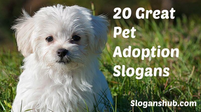 Pet Adoption Slogans #Slogans #Taglines #PetAdoptionSlogans