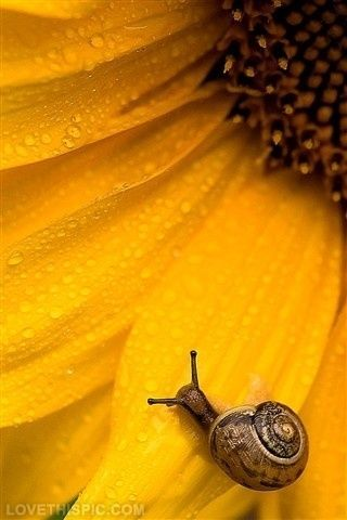 Sunny Snail Photography Pictures Photos Ideas Nature