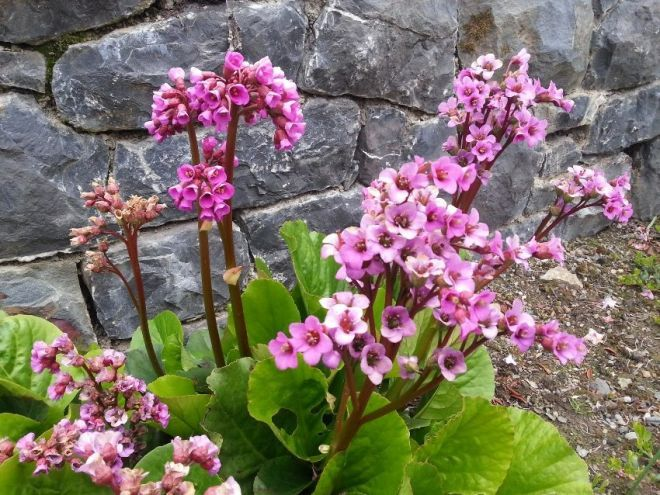 Идеи для сада и огорода | Цветник план, Цветы во дворе ...