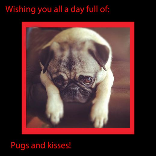 Happy Valentine S Day Xoxo Henry Pugs Pugs And Kisses Pug Love