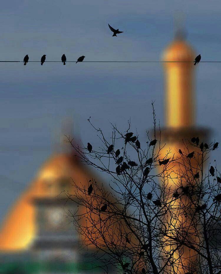 اجمل ما شاهدت Karbala Photography Islamic Pictures Battle Of Karbala