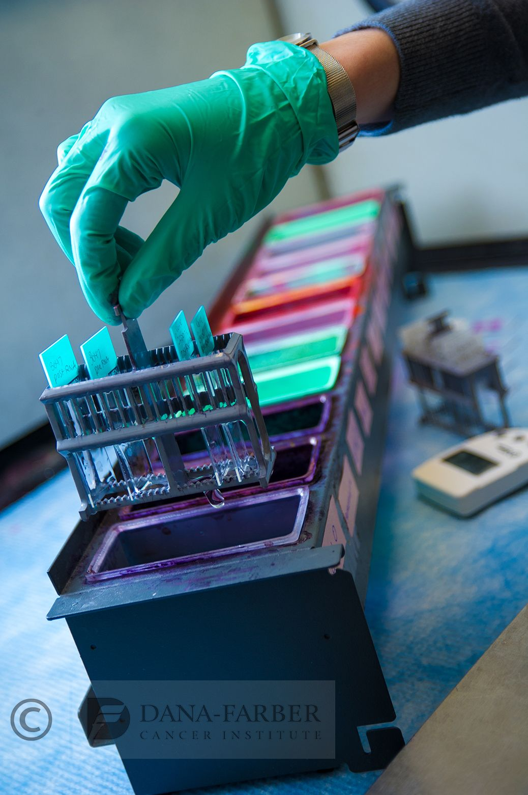 A technician staining slides at the histology staining