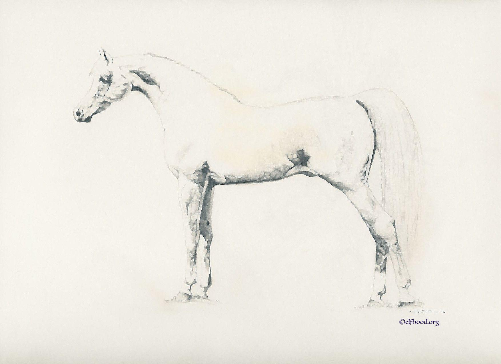 Desert Filly #horse art #arabian horse art #pencil drawings