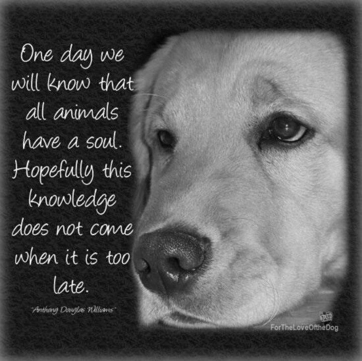 animal souls | Animals have souls      | PETS/Animals