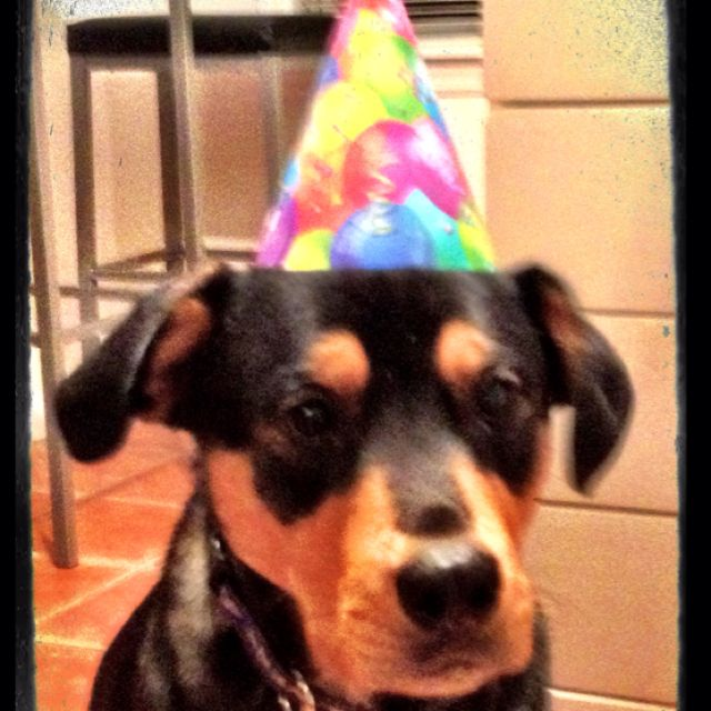 Birthday Rottweiler
