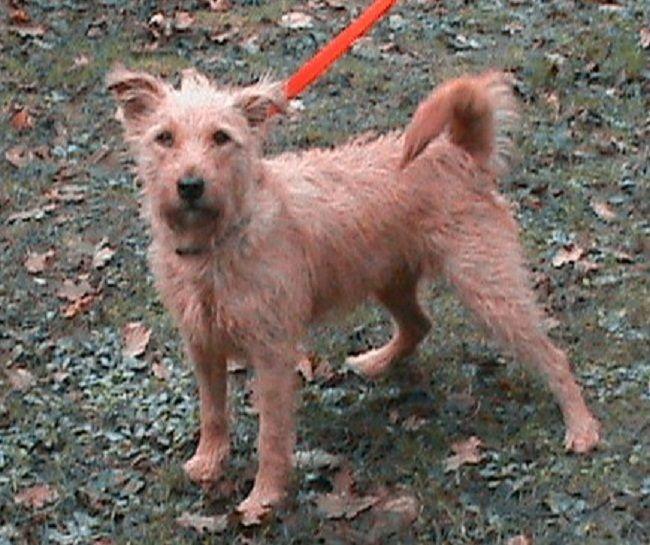 Border Terrier Cross Lakeland Terrier Water Sky Animal