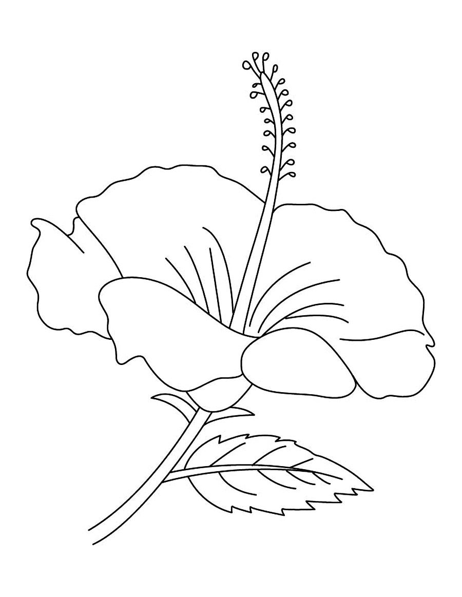 free printable hibiscus coloring pages flower coloring pages