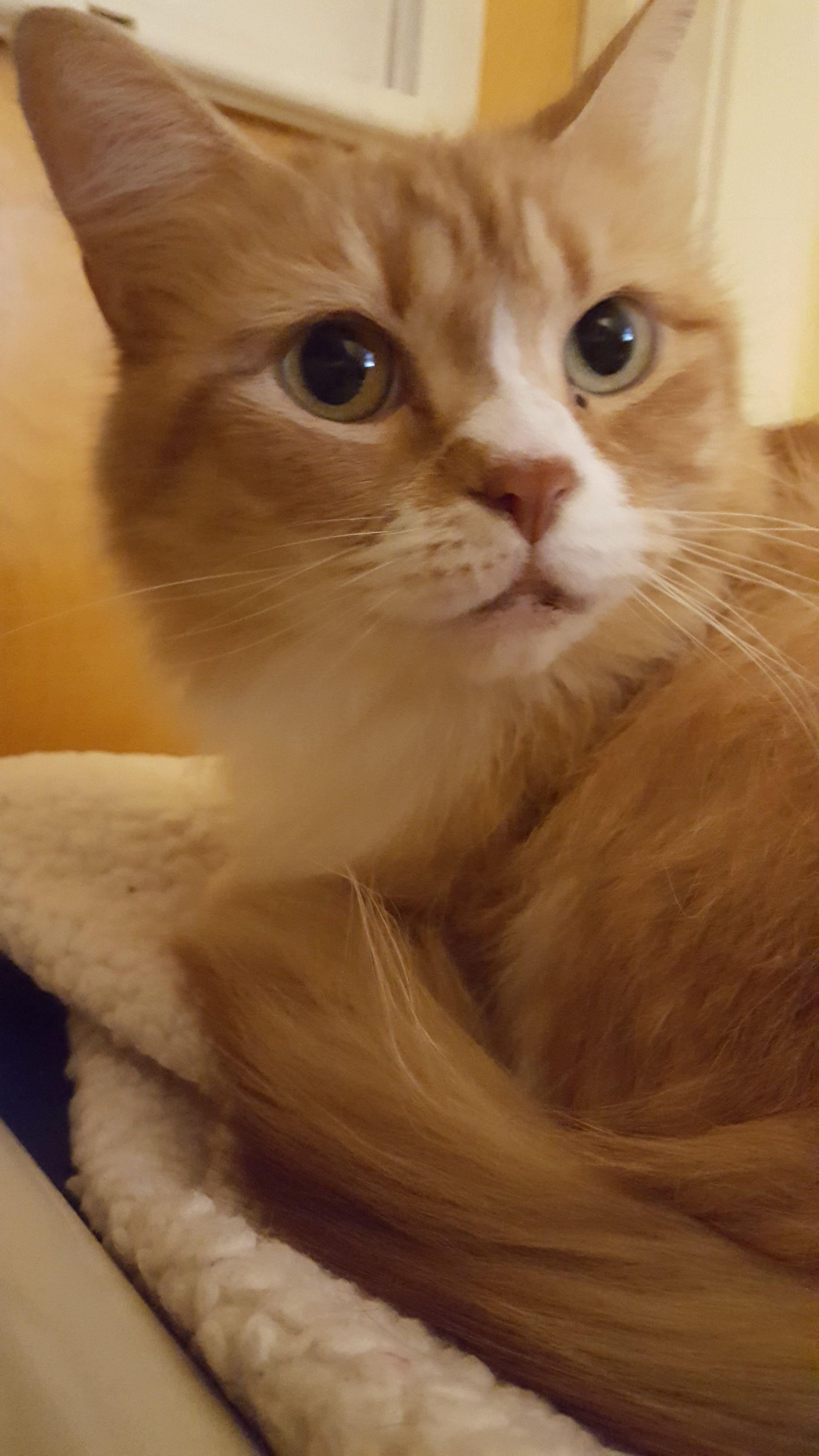 Adopt Lily on Cat adoption, Animal jokes, Beautiful cats