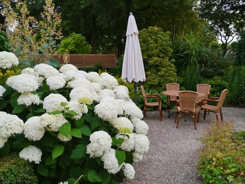 Гортензиевый сад фото