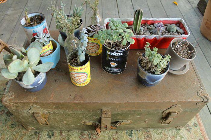 Plantas en frascos reciclados