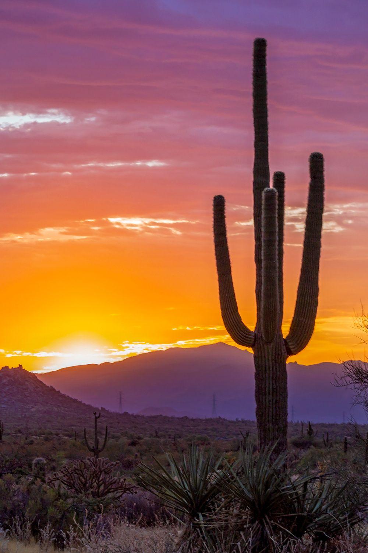 Vibrant Arizona Desert Sunrise With Saguaro Cactus Sunrise Landscape Arizona Landscape Desert Sunrise Hd wallpaper cacti evening sunset desert